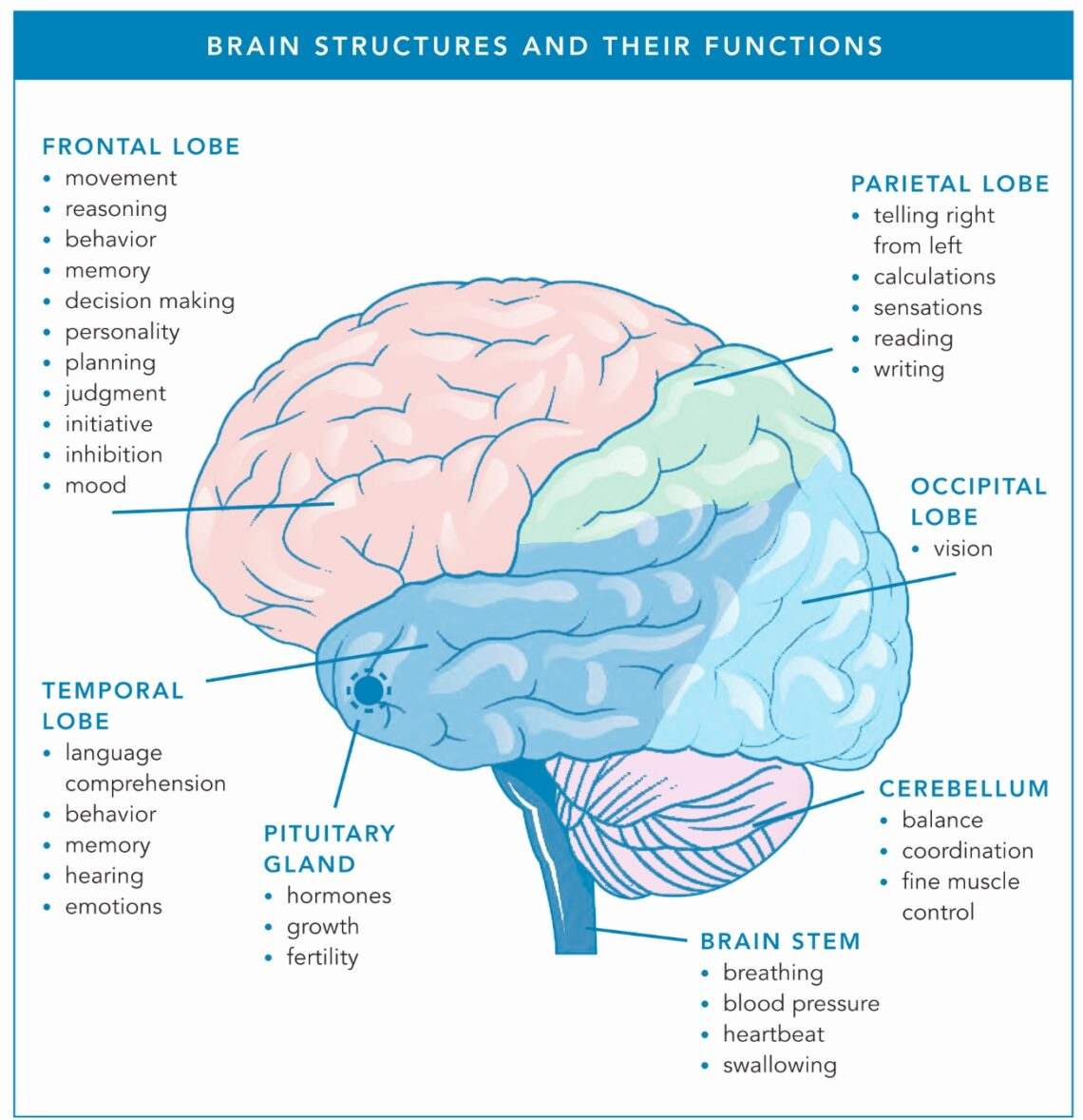 Acupuncture can help to fight with brain tumor without Surgery